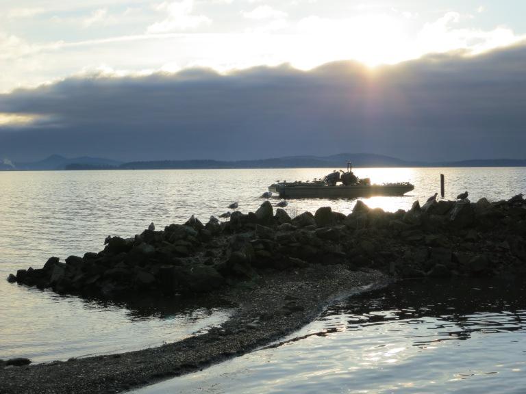 Seagull island