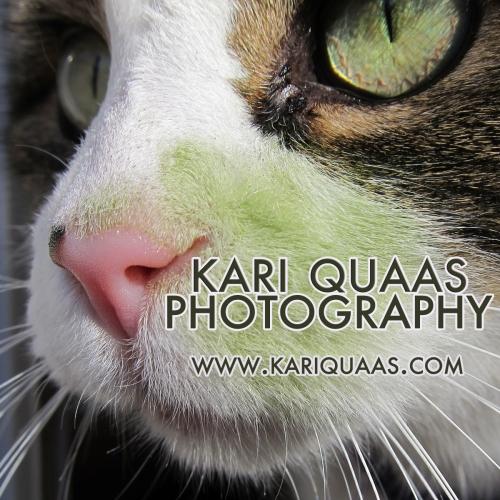 Kari Quaas Photography logo