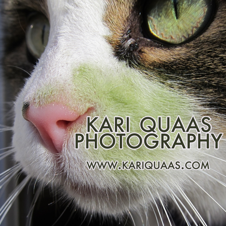 Updated Kari Quaas Photography Logo
