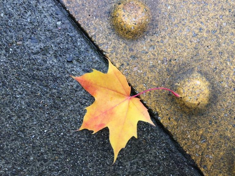 img_2400-leaf-pdx