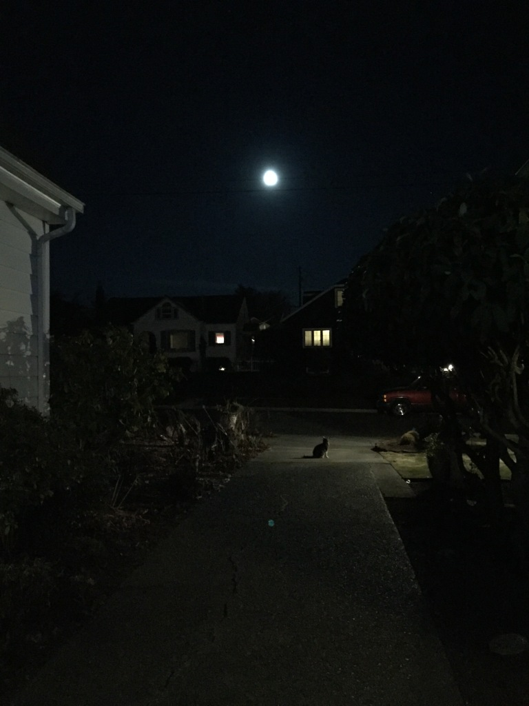 Johan and Moon by Kari Quaas