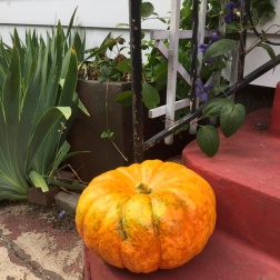 A Pumpkin in August